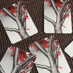 Cards 2017