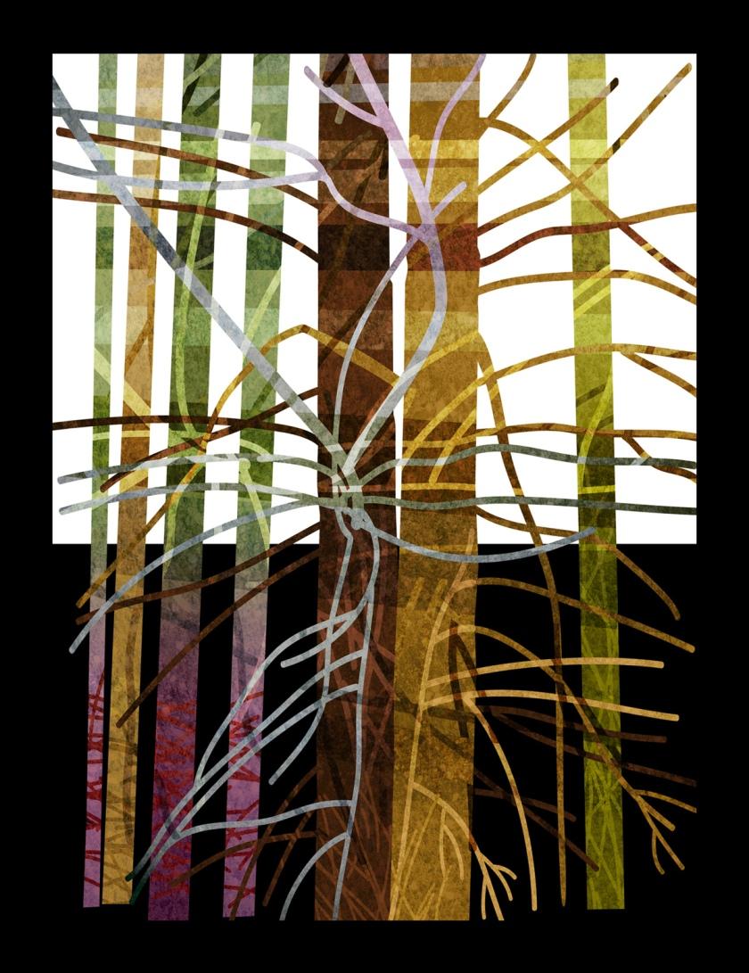 Redwood tree 6.5