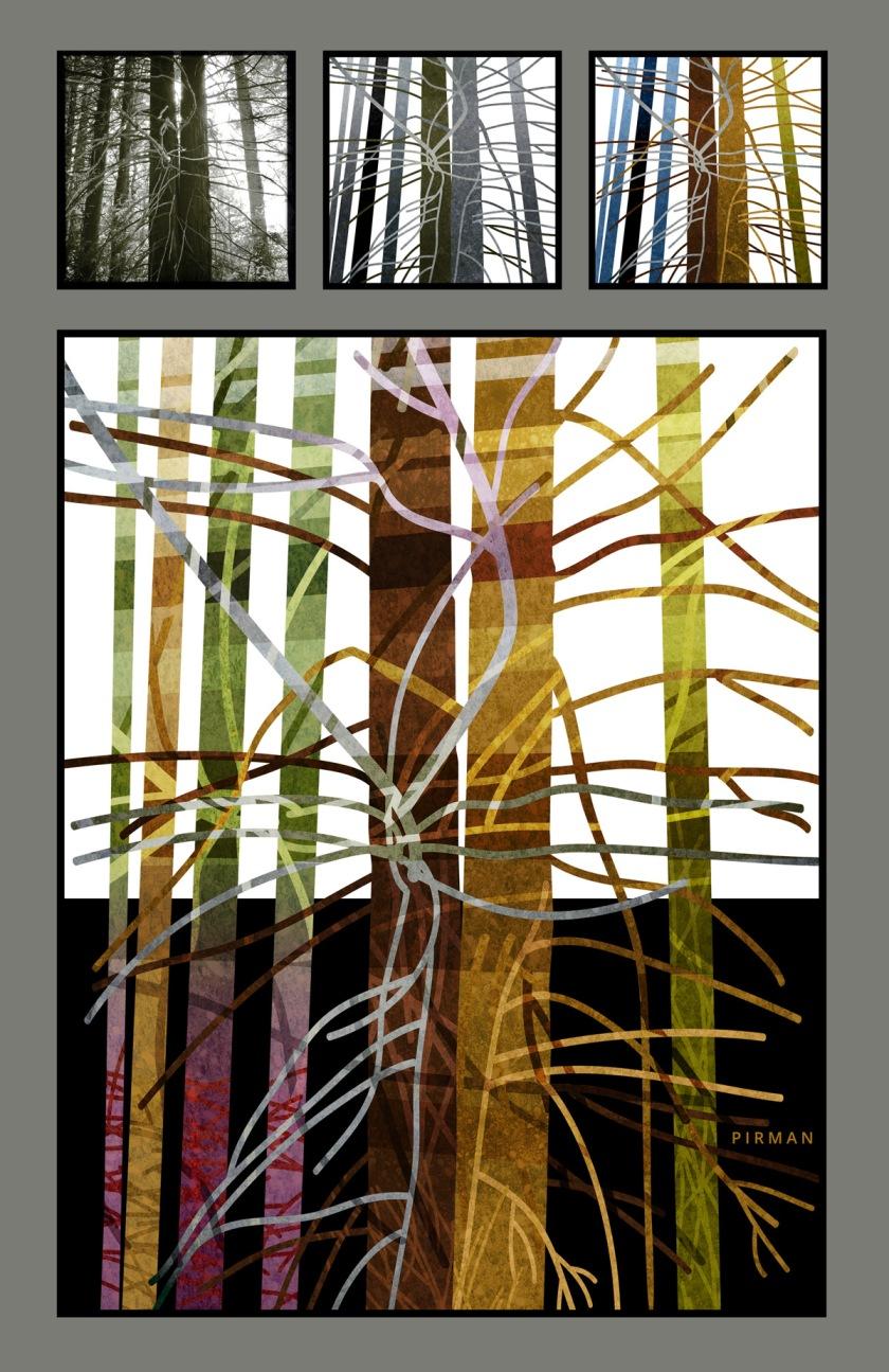 Redwood Tree 8 collage